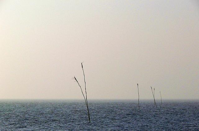 palen in de waddenzee